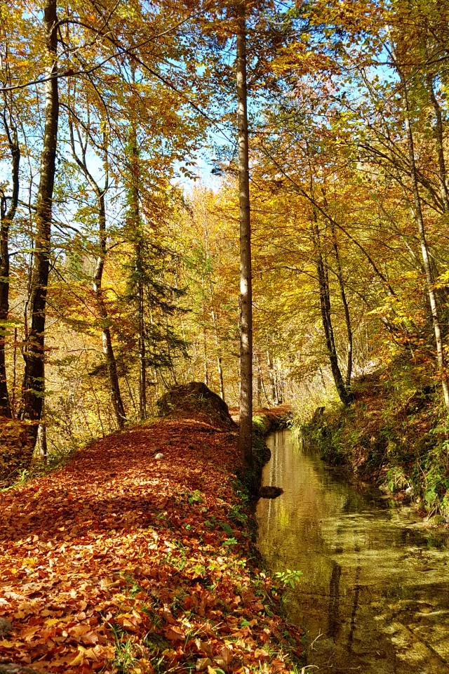 mostnica gorge walk autumn