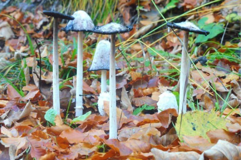 wild toadstool mushroom bohinj