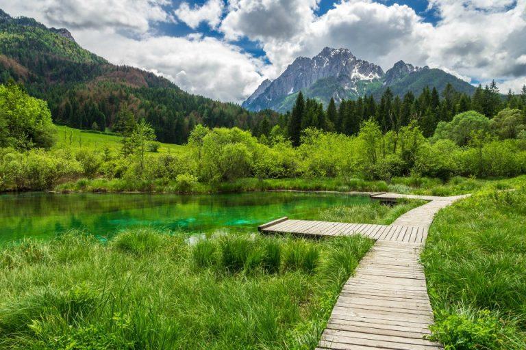 zelenci lake kranjska gora