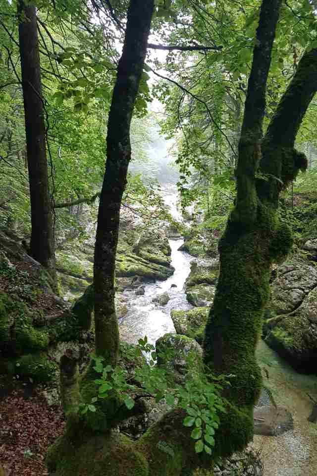 mostnica gorge trees