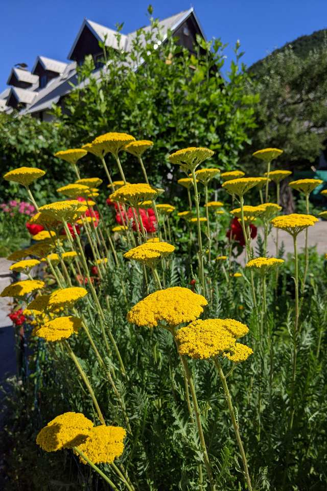 Flowers in Stara Fuzina