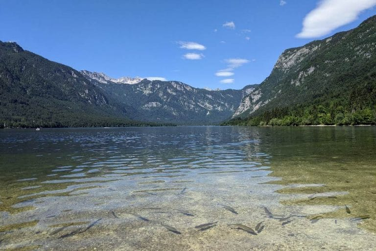 Kids love to watch fish swimming at Lake Bohinj in Slovenia
